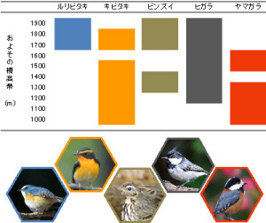 図.調査によって得られた結果の一部.鳥によって観察された標高が異なる. Photo by 川崎慎二(ルリビタキ),長嶋博之(キビタキ),浦島淳吉(ビンズイ),三木敏史(ヒガラ,ヤマガラ)
