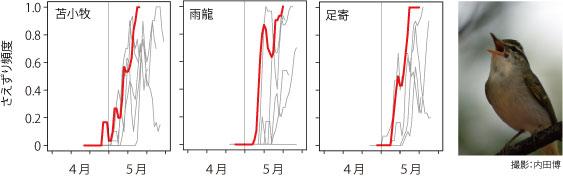 図1 北海道の苫小牧,雨龍,足寄のセンダイムシクのさえずり頻度の季節変化。赤の折れ線が2015年のさえずり頻度を示し,灰色が,過去のさえずり頻度を示す。赤い線が左の方にあることから,今年のさえずりが早くから活発だったことがわかる。