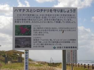 写真7 海岸にたてられた看板