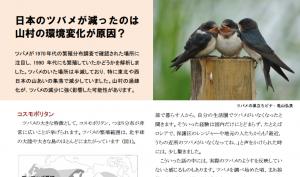 12月に発行したニュースレター第3号のツバメの記事