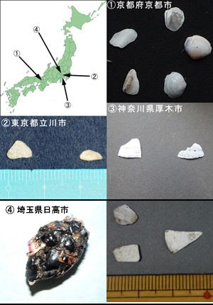 図2. ツバメの巣の下で見つかった貝殻とその地点。貝殻のサイズは1片が5~10mm程度。京都の左上の貝殻や東京の貝殻はかなり摩耗している。埼玉県の写真は左がヒナがはき出したペリット、右がペリットに含まれていた貝殻。詳しくは観察している方のブログを参照