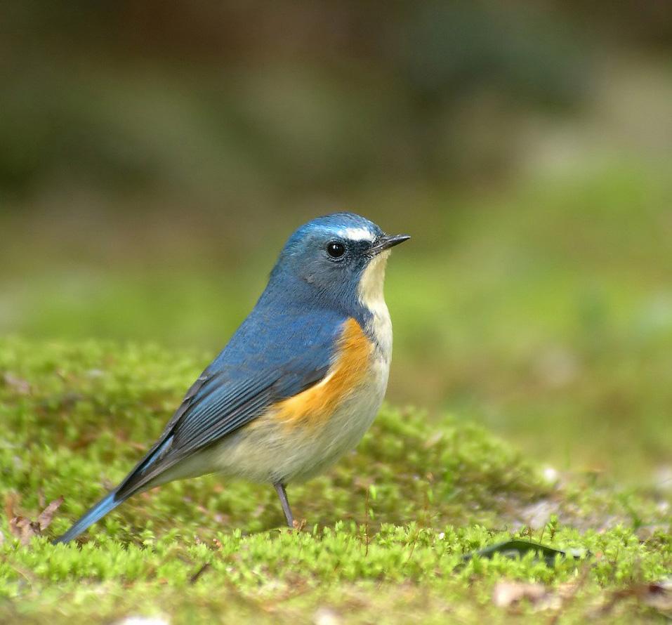 標高から見る鳥の分布 | バードリサーチニュース